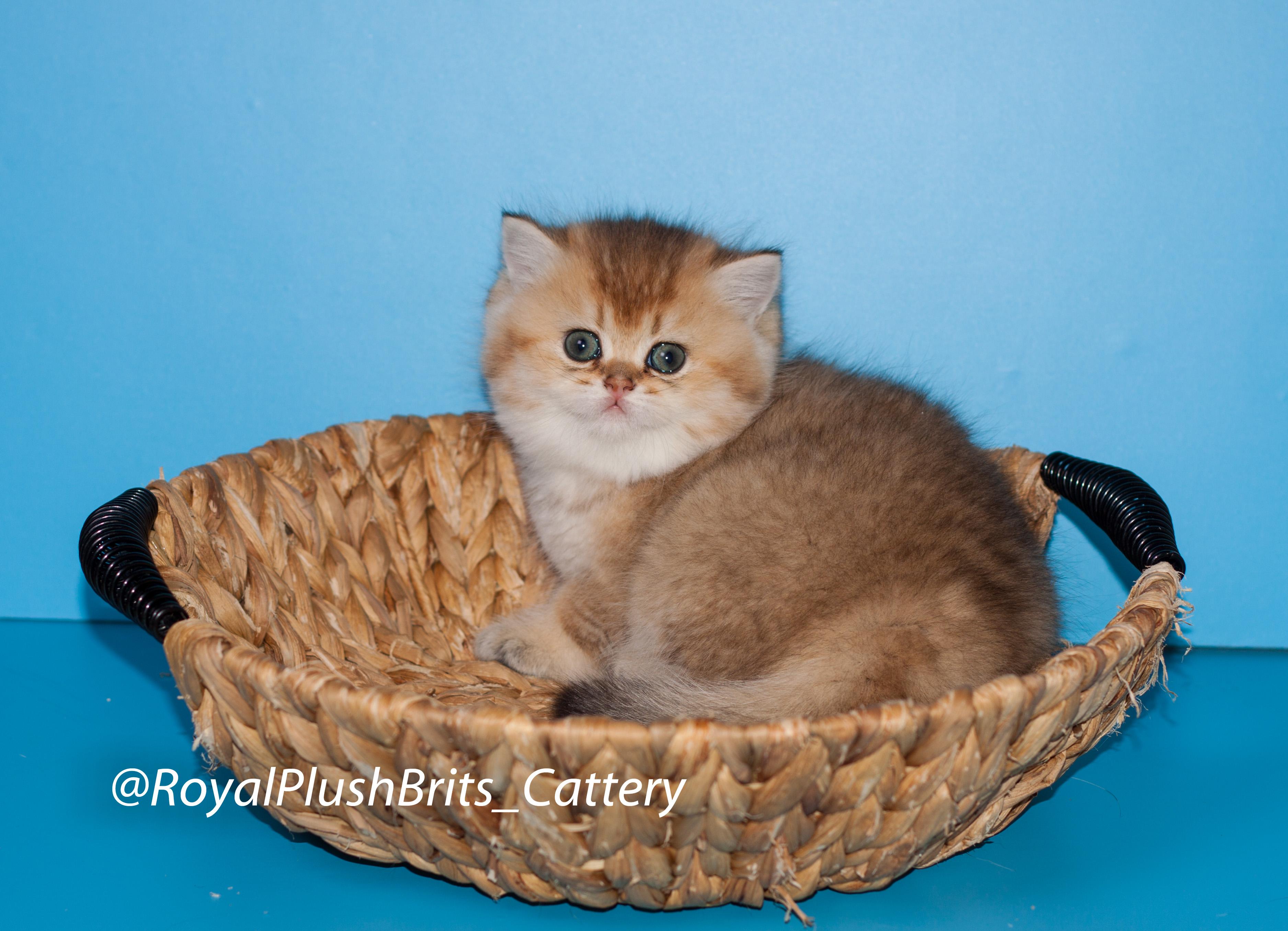 Baby Ophelia